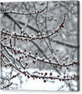 Winter In The Heartland 3 Acrylic Print