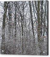 Winter In The Heartland 8 Acrylic Print