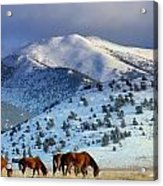 Winter In The High Desert  Acrylic Print by Jeanne  Bencich-Nations