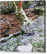 Winter In The Woods Acrylic Print by Adrian Evans