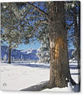 Winter In Yellowstone National Park Acrylic Print