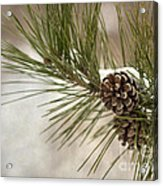 Winter Interlude Acrylic Print by Evelina Kremsdorf