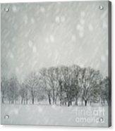 Winter Acrylic Print by Jelena Jovanovic