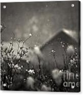 Winter Landscape With Snow Falling And Plants Acrylic Print