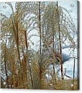 Winter Lasting Acrylic Print