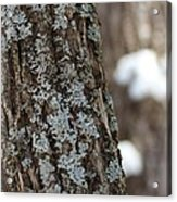 Winter Lichen Acrylic Print by Elizabeth Sullivan
