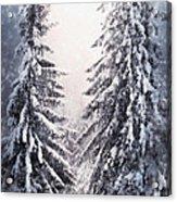 Winter Light And Tiger Acrylic Print