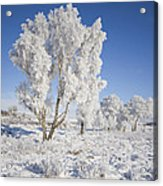 Winter Magic Acrylic Print