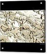 Winter Marigolds Acrylic Print