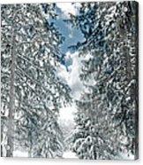 Winter Me Acrylic Print
