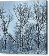 Winter Morning View Acrylic Print