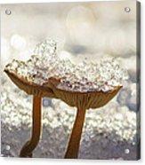 Winter Mushrooms Acrylic Print