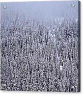 Winter Mystery Acrylic Print