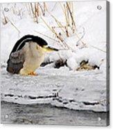Winter Night Heron Acrylic Print