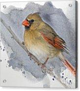 Winter Northern Cardinal Acrylic Print