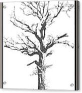 Winter Oak Art Acrylic Print