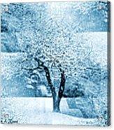 Winter Orchard Acrylic Print