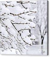 Winter Park Under Heavy Snow Acrylic Print by Elena Elisseeva