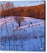 Winter Pasture Sunset Acrylic Print