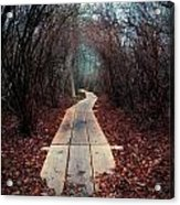Winter Path Acrylic Print