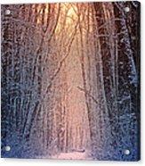 Winter Pathway Acrylic Print