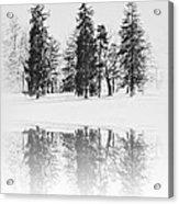Winter Pines Acrylic Print