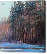 Winter Pines Acrylic Print by Ed Chesnovitch