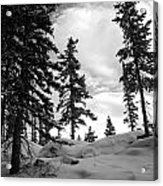 Winter Pines Silhouetted Against The Sky Acrylic Print