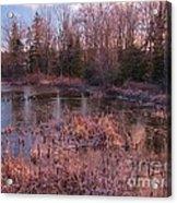 Winter Pond Landscape Acrylic Print