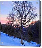 Winter Poplar Tree Acrylic Print