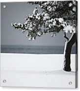 Winter Quiet Acrylic Print