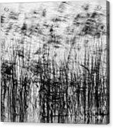 Winter Reeds Acrylic Print