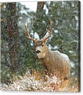Winter Returns Acrylic Print