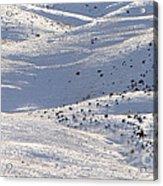 Winter Ride Acrylic Print