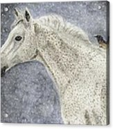 Winter Rider Acrylic Print