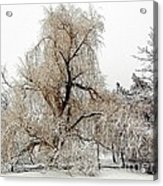 Winter Scene Acrylic Print