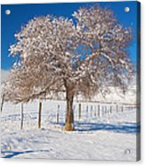 Winter Season On The Plains Portrait Acrylic Print