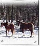Winter Shadow Horses Acrylic Print