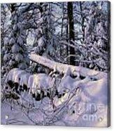 Winter Solemn Acrylic Print