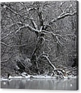 Winter Solitude Acrylic Print