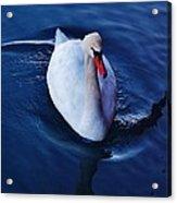 Winter Spin... Swan Style Acrylic Print