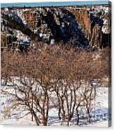 Winter Sprouts Acrylic Print