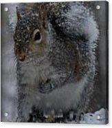 Winter Squirrel 1 Acrylic Print
