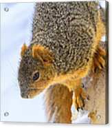 Winter Squirrel Acrylic Print