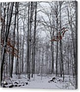 Winter Storm In The Forest Acrylic Print