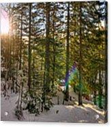 Winter Sun Flares Acrylic Print