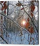 Winter Sunset 2 Acrylic Print