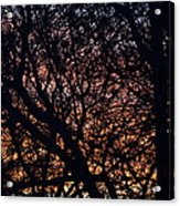 Winter Sunset Silhouette Acrylic Print
