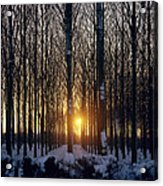 Winter Sunset Through The Trees Acrylic Print
