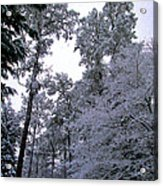 Winter Surprise Acrylic Print by Silvie Kendall